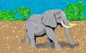 Elephant on the Savanna